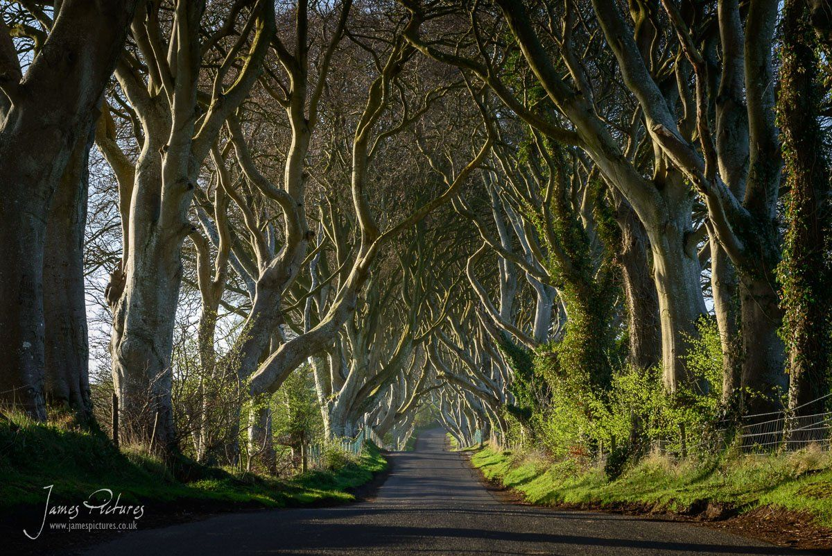 "This beautiful avenue of beech trees in Ballymoney, Northern Ireland is a popular photographed road, and is now a popular tourist location refereed to as ""The Dark Hedges"""