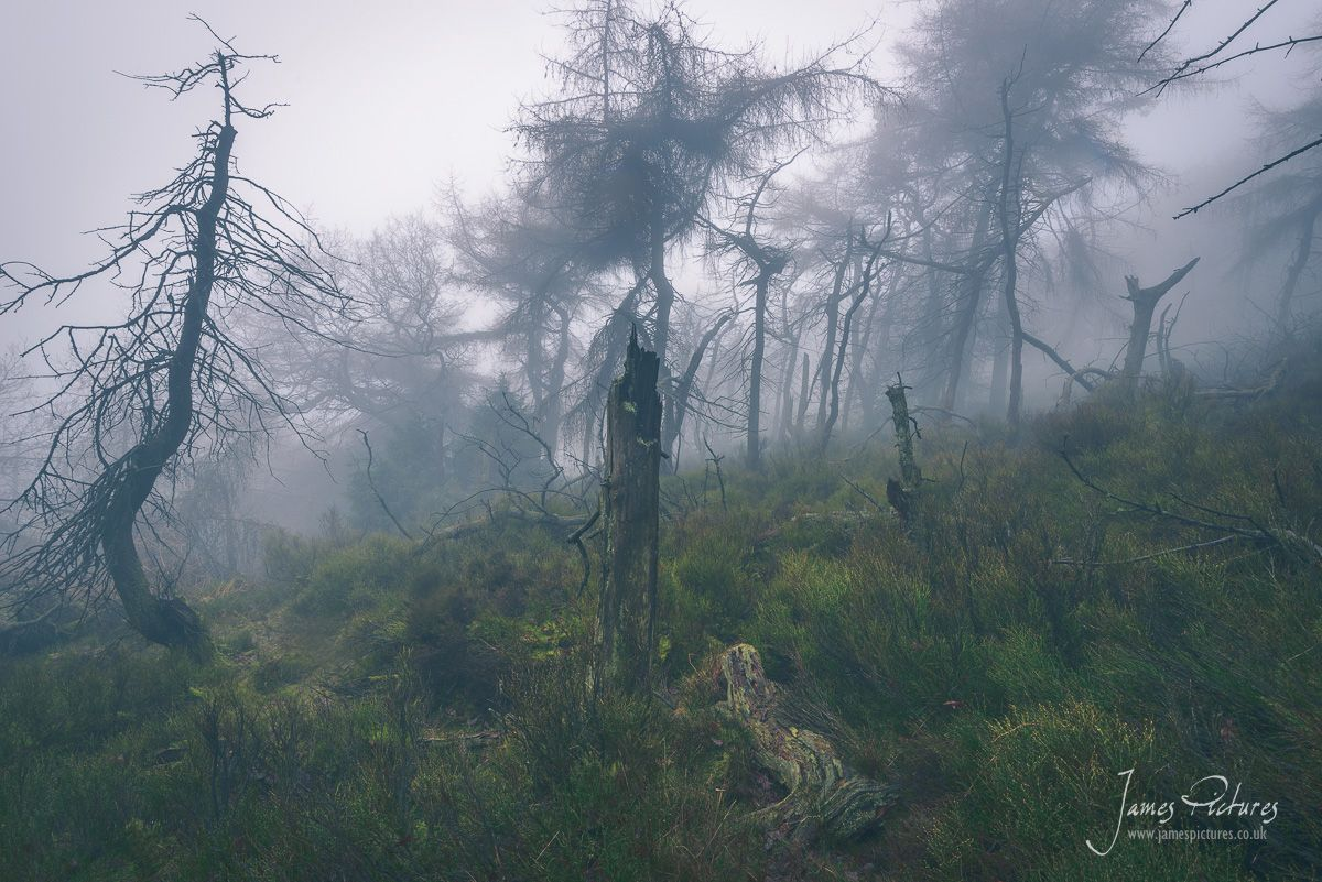 Fallen and dead wood under The Roaches make for eerie scenes.