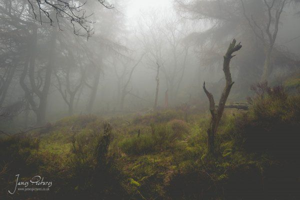 Lost in the thick of The Roaches woods