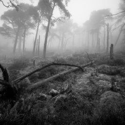 The Roaches can be dark and very surreal in the right conditions