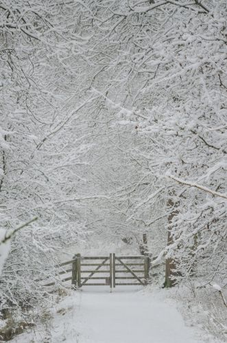 Dovedale Snow Covered Path