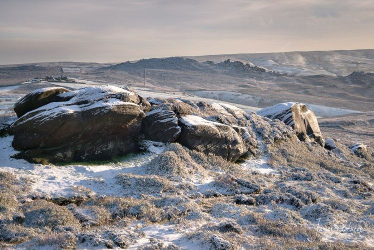 The Roaches And Snow