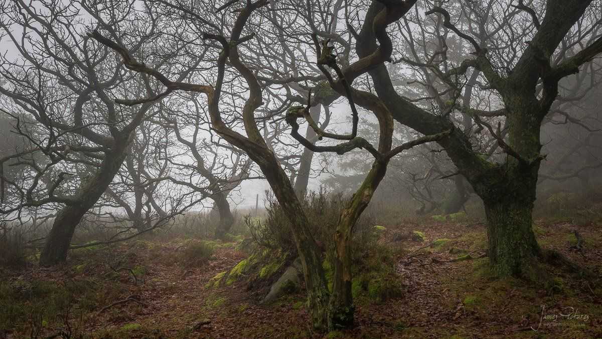 The Roaches Woodland