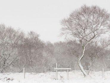 Warslow Moors  Staffordshire