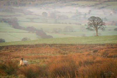 Staffordshire Landscape