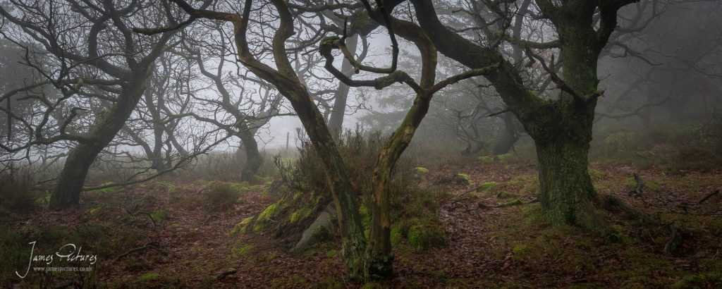 The Roaches in the Peak District in the right conditions can be ever so haunting but at the same time majestic and unique!